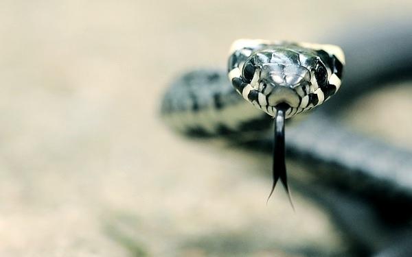 Bild einer grün-weißen Schlange, die ihre Zunge herausstreckt.